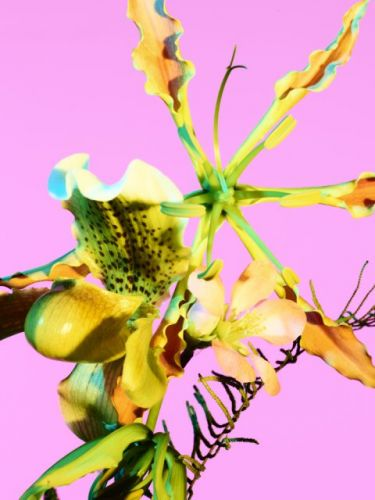 """Ben Hassett's New Book """"Color"""" Lives Up to its Name"""