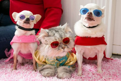 These pampered pets have wardrobes full of designer clothes