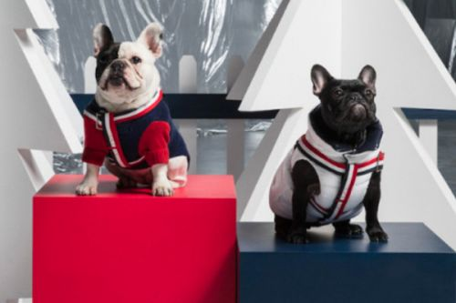 Moncler Sets Its Sights on Dogs for the Holiday Season