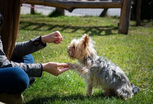 Do You Love Animals? 5 Ways to Make Money Out of It