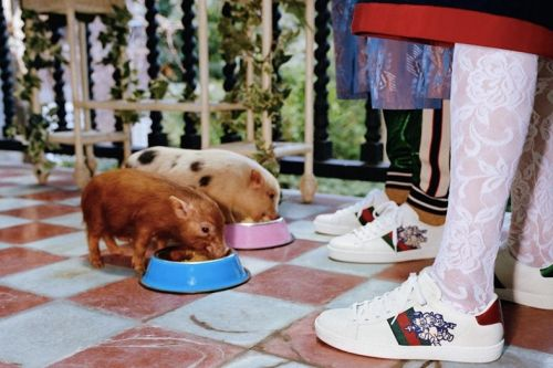 Piglets Are the Stars of Gucci's New Campaign